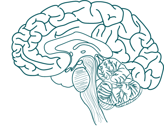 Lumosity Brain Training and Neuroplasticity ...